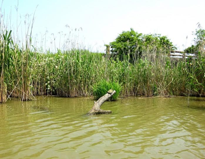 03 Lakeside district boat tour of Ohomihachiman