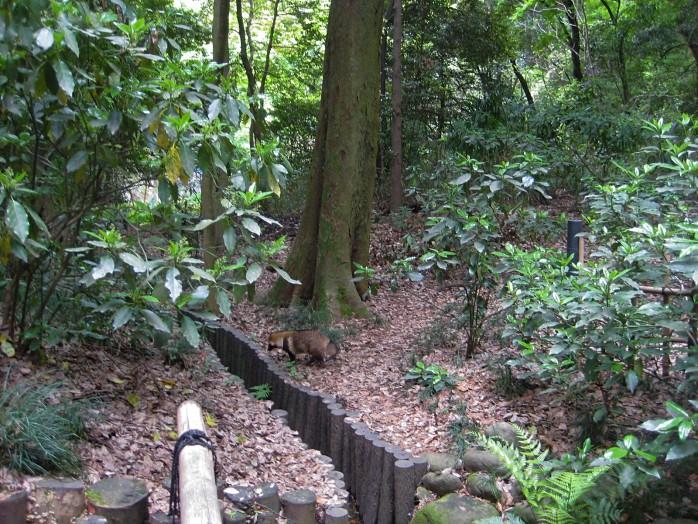 06-meiji-shrine_raccoon-dog
