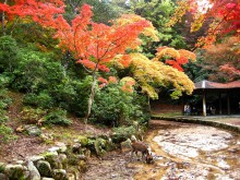 Red leaves in Miyajima