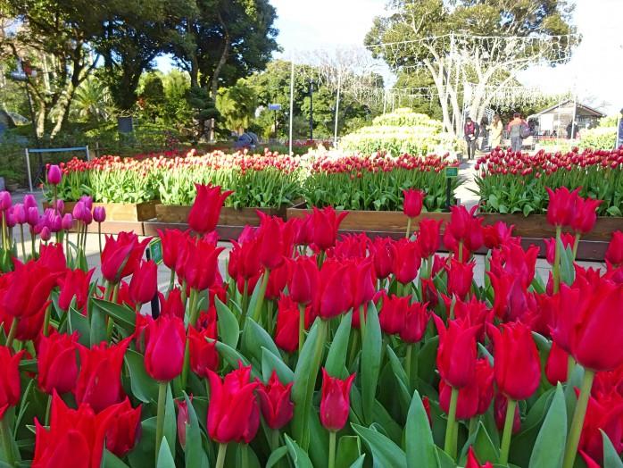 05 Enoshima Samuel Cocking garden